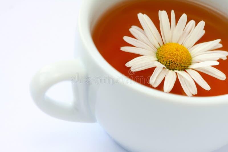 Copo com chá fotos de stock