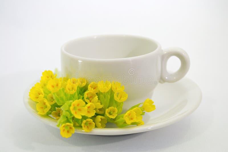 Copo de café com a flor dos veris do Primula imagens de stock