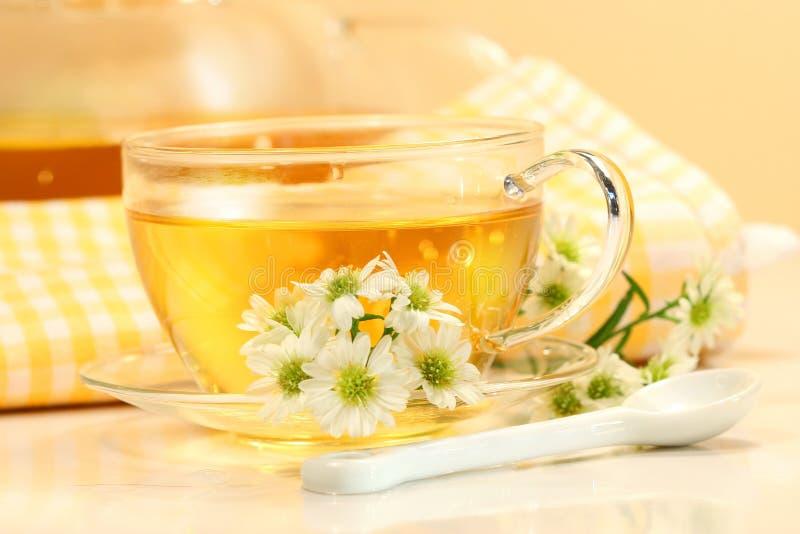 Copo de chá de vidro com chá erval fotos de stock royalty free