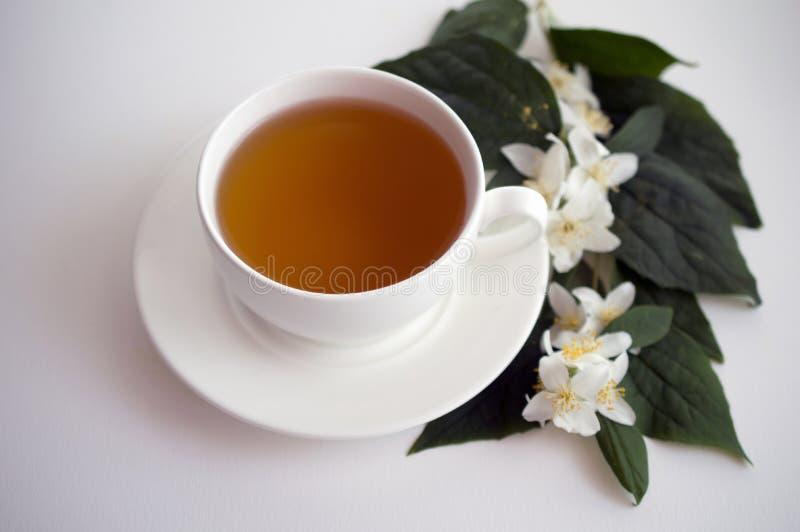 Copo de flores do chá e do jasmim fotos de stock royalty free