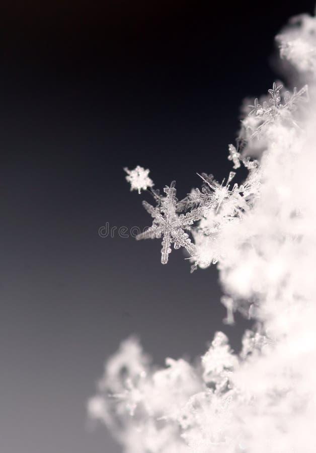 Copo de nieve foto de archivo libre de regalías