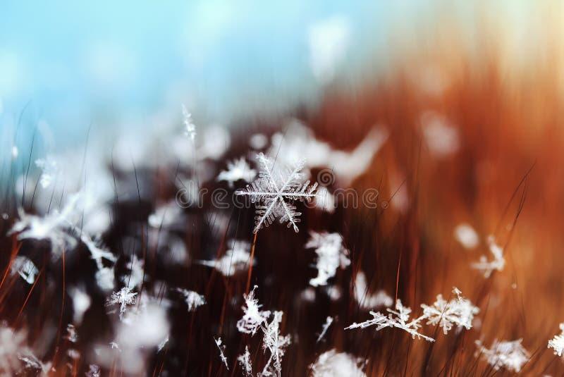 Copo de nieve hermoso que miente en los pelos de la piel fotografía de archivo libre de regalías