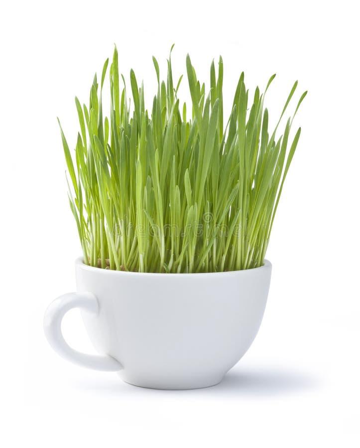 Copo do branco da grama verde imagem de stock royalty free