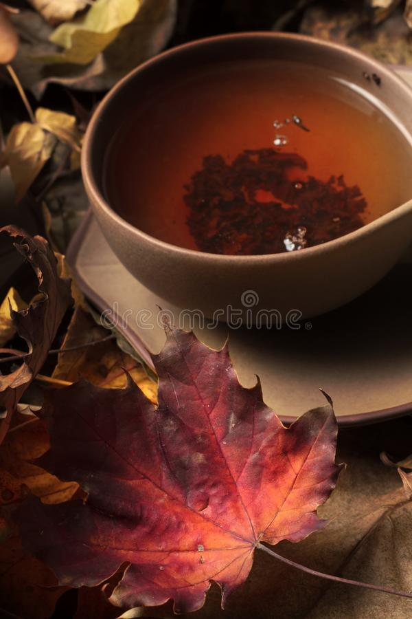 Copo do chá imagem de stock royalty free
