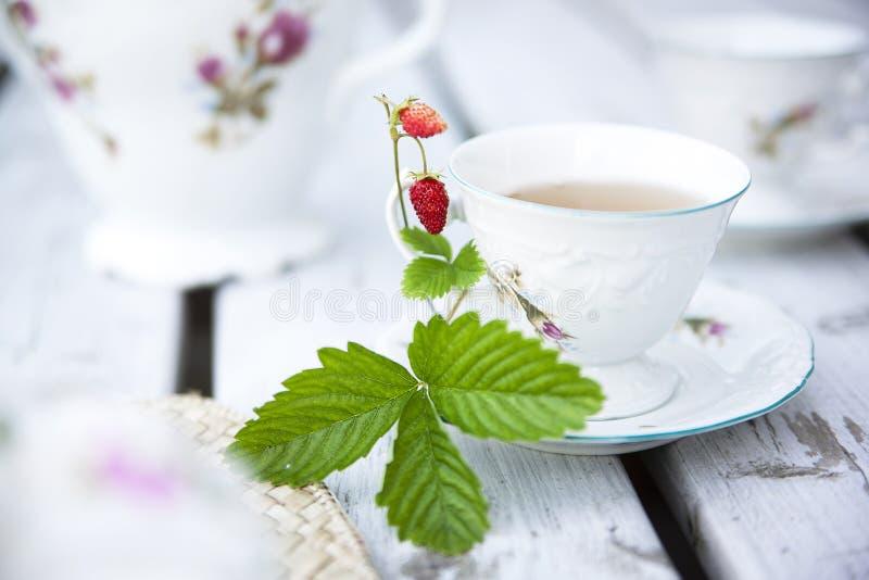 Copo do chá. fotos de stock royalty free