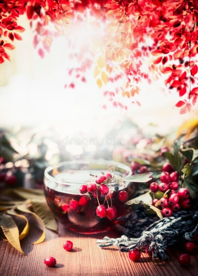 Copo do chá com lenço, folhas de outono e as bagas vermelhas na tabela de madeira do jardim Bebidas quentes do outono foto de stock
