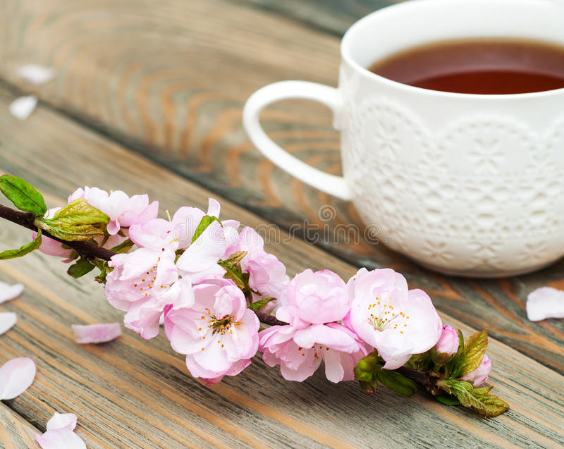 Copo do chá e da flor de sakura foto de stock