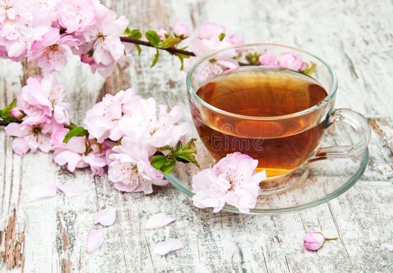 Copo do chá e da flor de sakura fotos de stock royalty free
