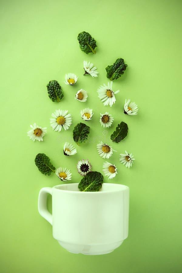 Copo do chá e das camomilas conceito natural erval do chá Copo branco do chá com flores da camomila fotos de stock