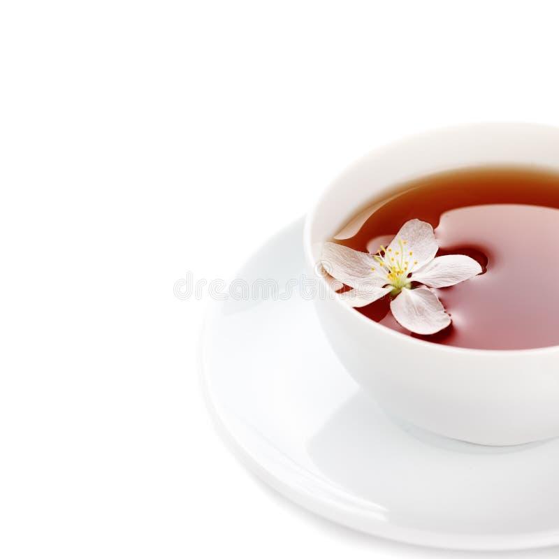 Copo do chá em um fundo isolado branco fotos de stock