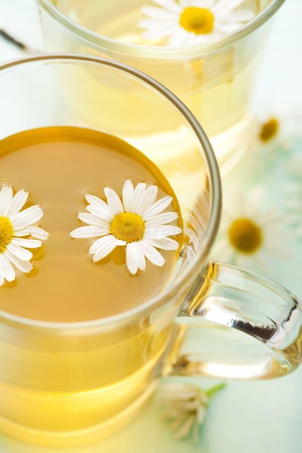 Copo do chá erval com hcamomile fotografia de stock
