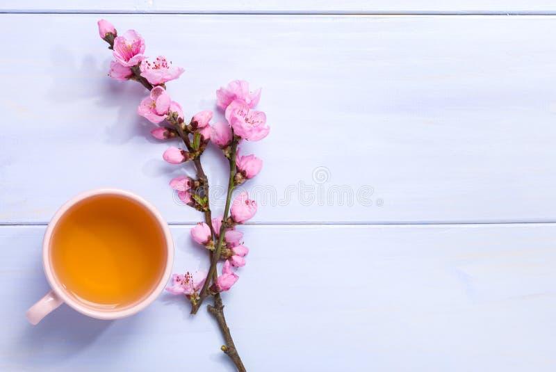 Copo do chá verde e ramos do pêssego de florescência na tabela de madeira lilás fotografia de stock