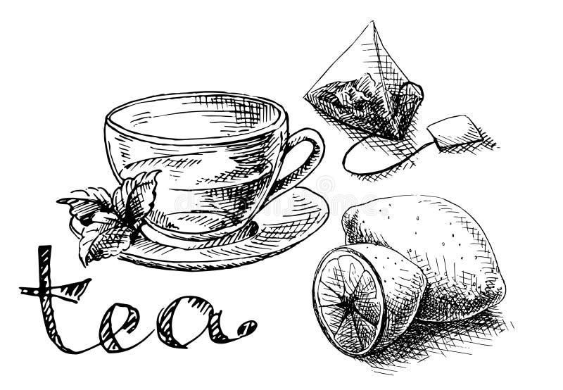 Copo, hortelã e saquinho de chá ilustração stock