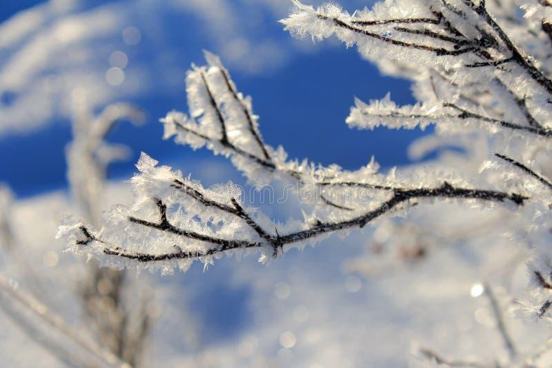 Copos de nieve helados que cubren una rama foto de archivo libre de regalías