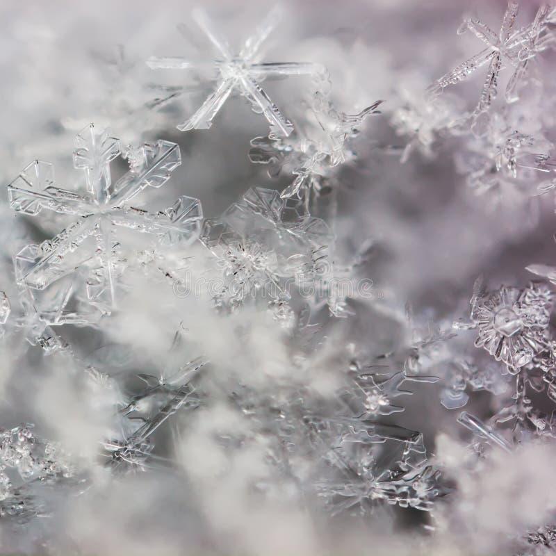 Copos de nieve macros reales foto de archivo