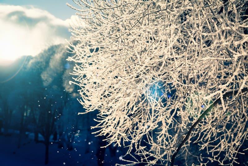 Copos de nieve y ramas de árbol congeladas en los rayos del sol poniente fotos de archivo libres de regalías