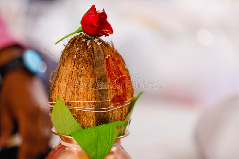 Copper kalash with coconut and mango leaf with floral decoration.  royalty free stock photo