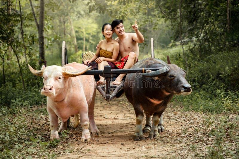 Coppia il giogo tailandese della Buffalo di tempo di felicità della famiglia degli agricoltori immagini stock libere da diritti