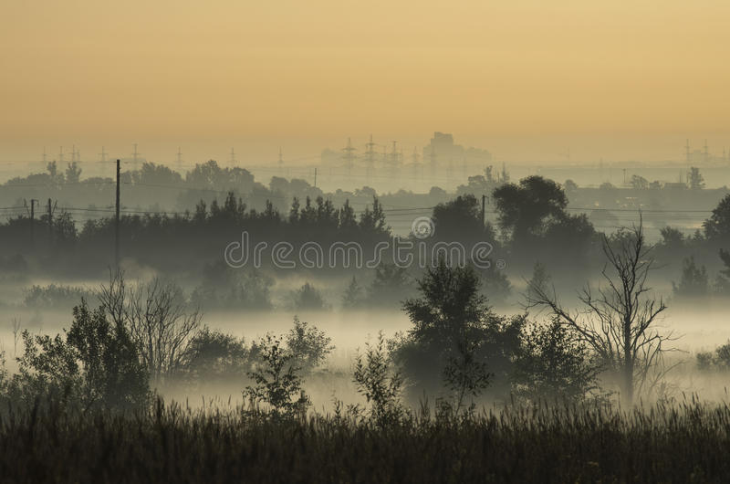 Coppice в тумане утра на окраинах города стоковая фотография rf