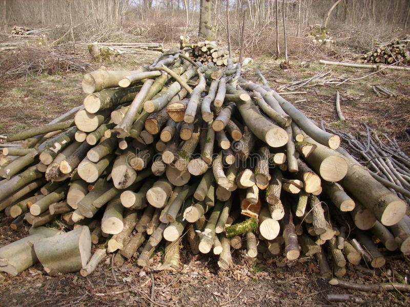 Coppiced woodland royalty free stock images