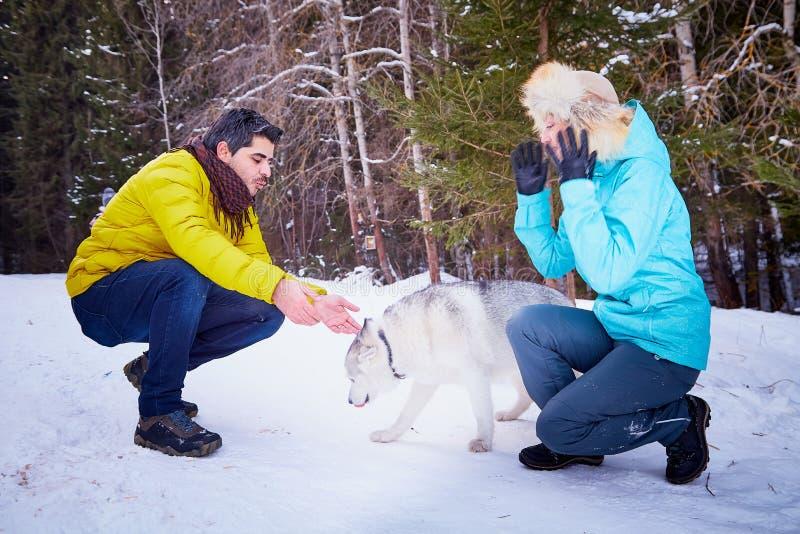Coppie amorose felici nella ragazza russa ordinaria della foresta nevosa di inverno e divertiresi ed abbraccio turchi bei dell'uo immagini stock