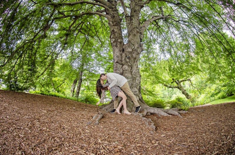 Coppie che baciano sotto un grande albero immagini stock