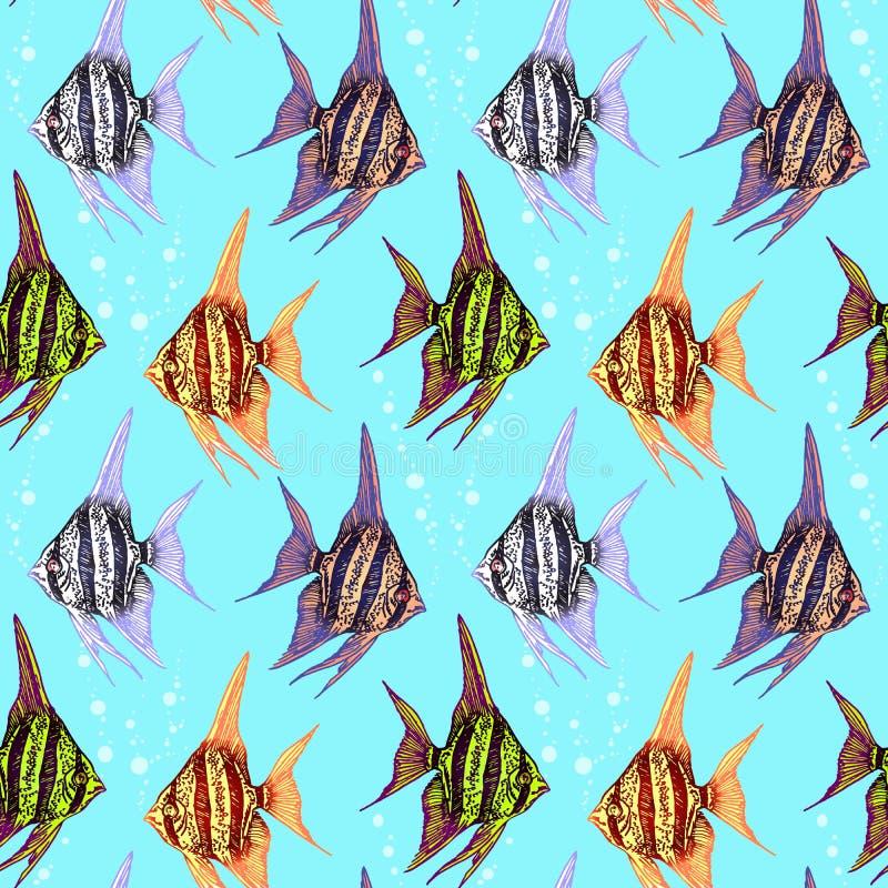 Coppie Colourful degli angeli di mare che looing in a vicenda illustrazione di stock