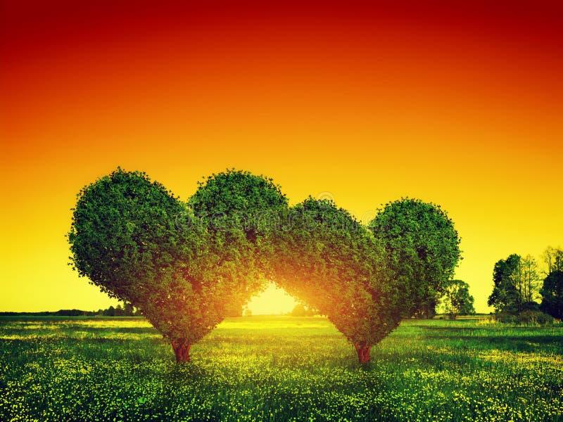 Coppie degli alberi di forma del cuore su erba al tramonto Amore immagine stock libera da diritti