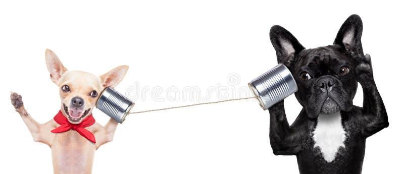 Coppie dei cani sul telefono immagini stock