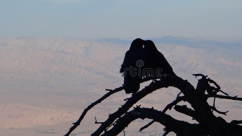 Coppie dei corvi immagini stock libere da diritti