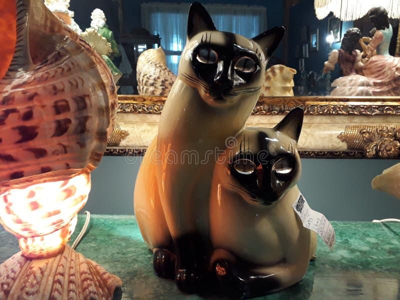 Coppie dei gatti immagini stock