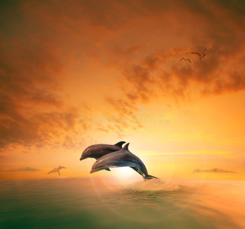 Coppie del dophin del mare che saltano attraverso l'onda di oceano che fa galleggiare metà di ai immagine stock