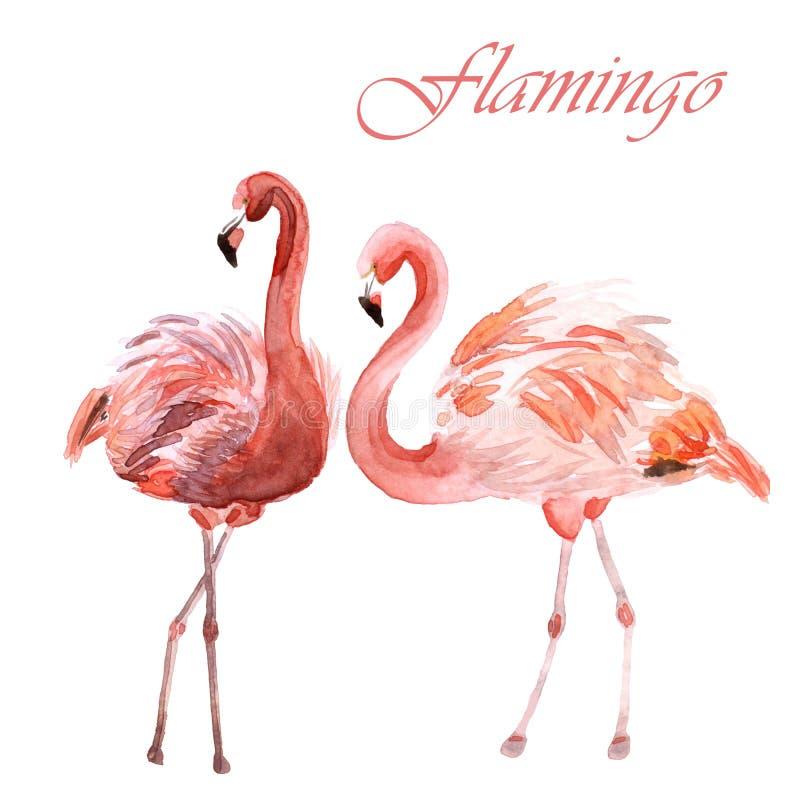 Coppie dell'acquerello dei fenicotteri rosa isolati su un fondo bianco royalty illustrazione gratis