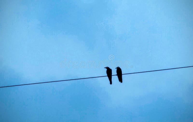 Coppie dell'uccello fotografie stock libere da diritti