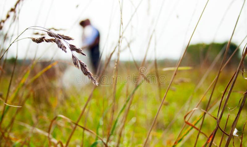 Coppie della persona appena sposata felici insieme al campo, nelle orecchie della priorità alta fotografia stock libera da diritti