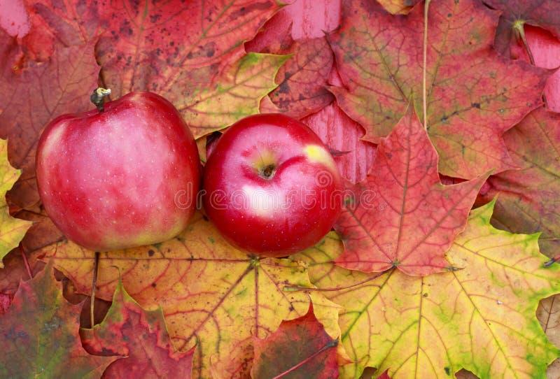 Coppie di Apple rosso succoso maturo che si trova sui bordi di legno della tavola fotografia stock libera da diritti
