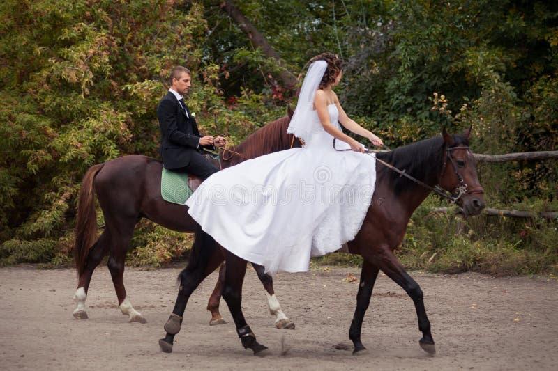 Coppie di nozze sui cavalli fotografie stock