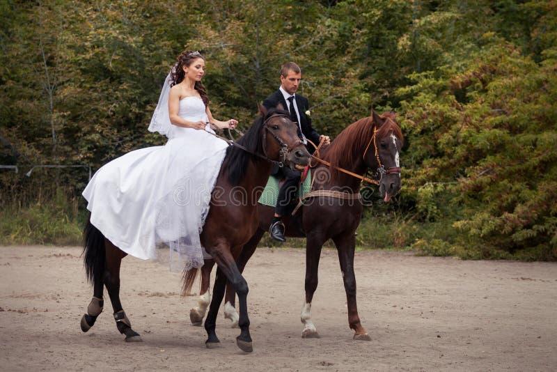 Coppie di nozze sui cavalli fotografia stock libera da diritti