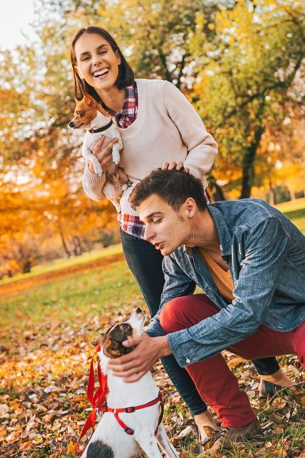 Coppie felici che camminano nel parco di autunno e che giocano con i cani immagine stock