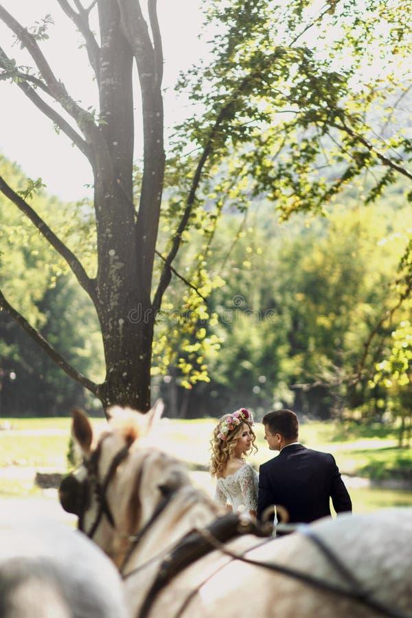 Coppie felici di nozze di fiaba che camminano nel parco con i cavalli immagini stock