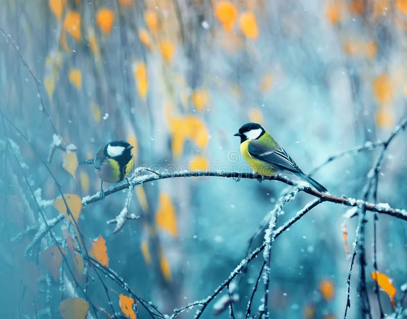 Coppie i chickadees che si siedono nel parco su un ramo fra luminoso immagine stock libera da diritti