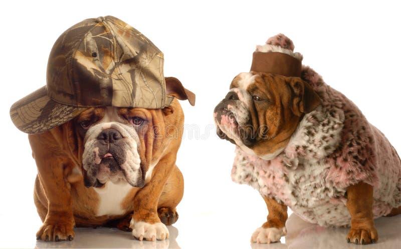 Coppie maggiori del cane fotografia stock