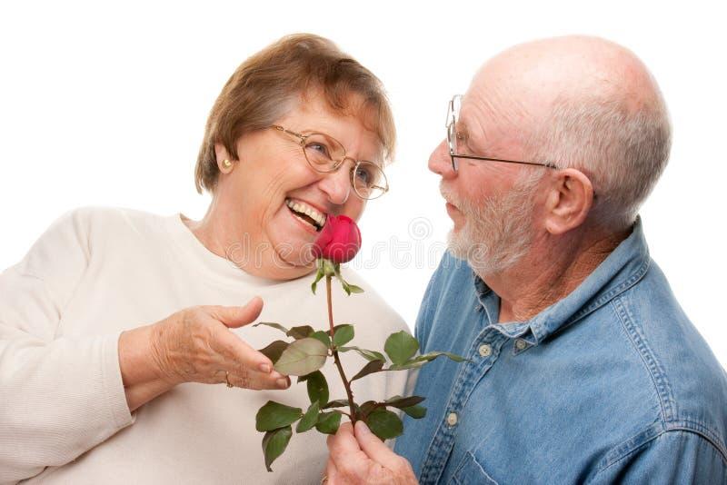 Coppie maggiori felici con Rosa rossa immagine stock libera da diritti