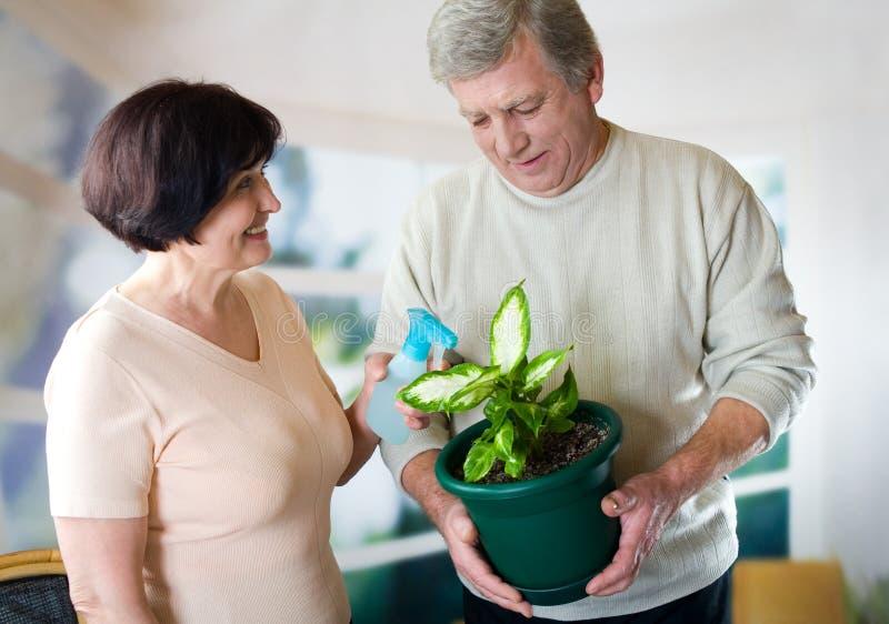 Coppie mature attraenti con il flowerpot fotografia stock libera da diritti