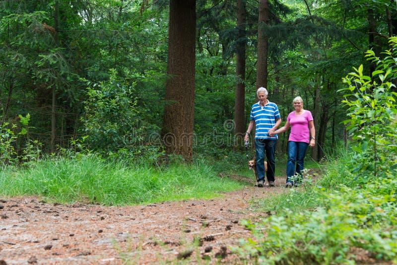 Coppie senior che camminano con il cane in natura immagini stock libere da diritti