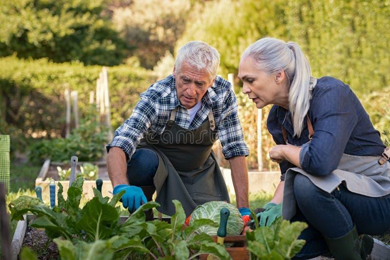 Coppie senior che selezionano le verdure immagine stock libera da diritti
