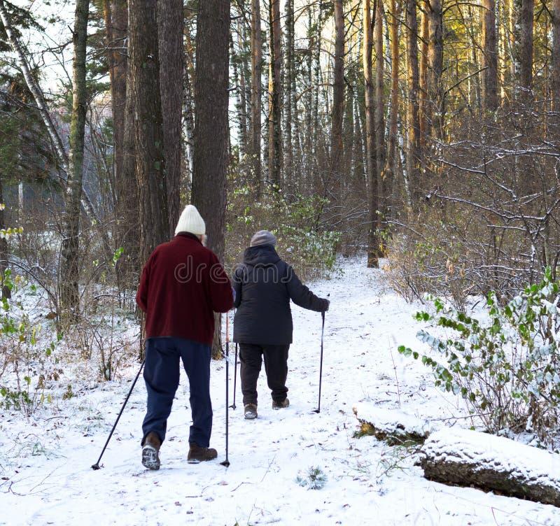 Coppie senior con i pali di trekking che fanno un'escursione nella foresta fredda immagine stock libera da diritti