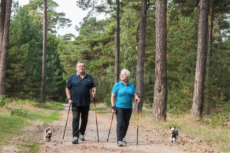 Coppie senior di camminata del nordico con i cani fotografia stock