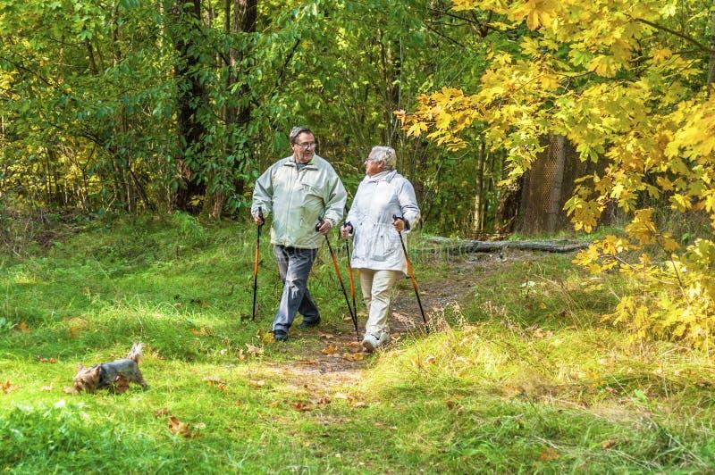 Coppie senior di camminata nordiche in una foresta fotografie stock libere da diritti