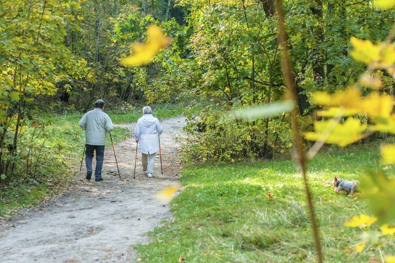 Coppie senior di camminata nordiche in una foresta fotografie stock